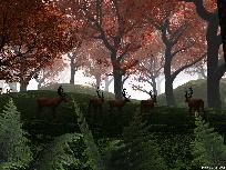 Galerie autumnforest.jpg anzeigen.