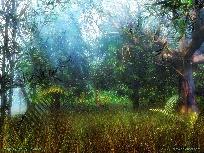 Galerie forest.jpg anzeigen.