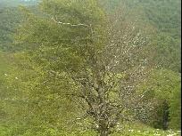 Galerie 06 Baum mit 2 Seiten.jpg anzeigen.